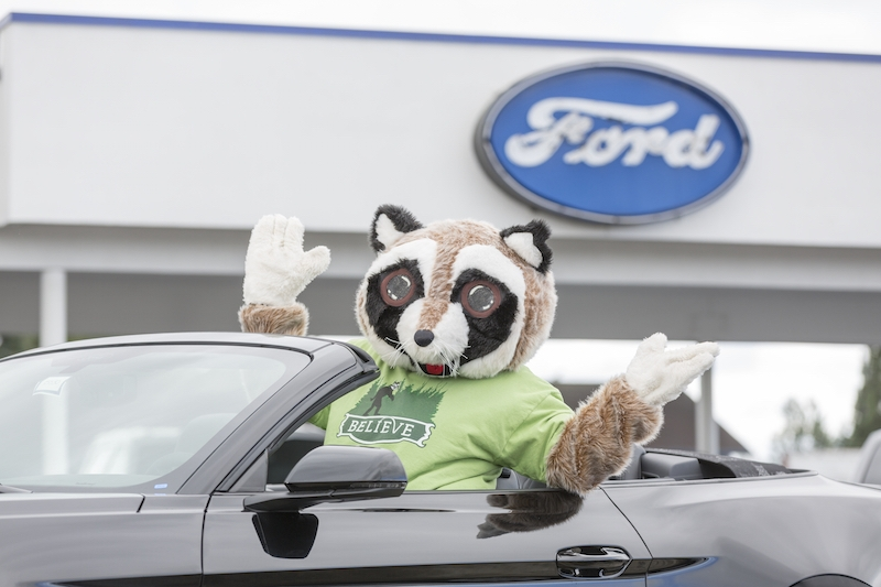 Raccoon mascot posing in a convertible Ford