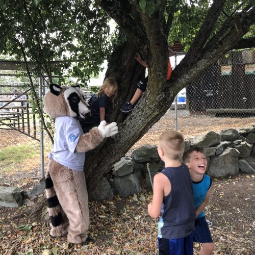 Rocky Raccoon climbing tree with kids