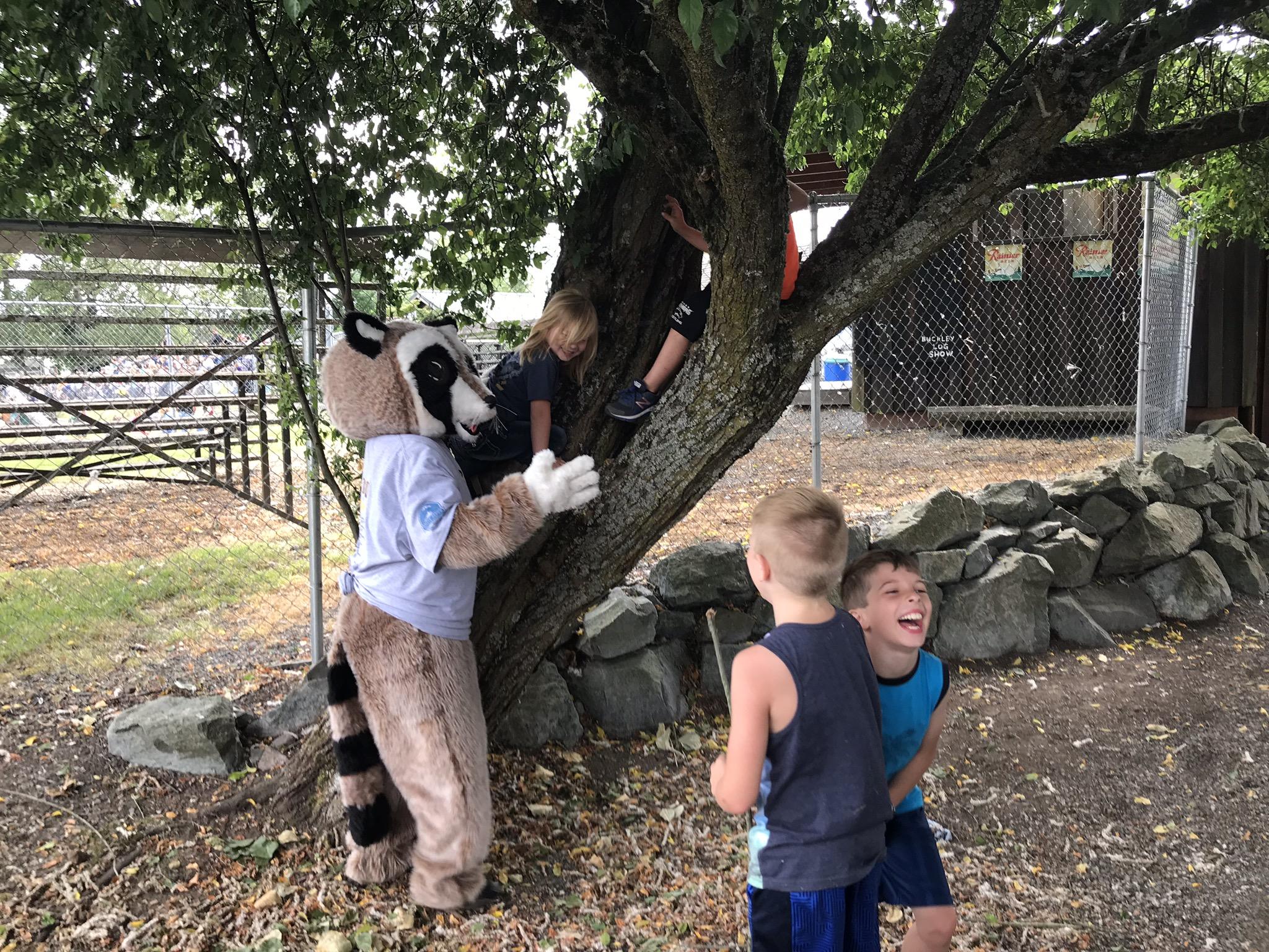 Rocky Raccoon climbing tree with kids