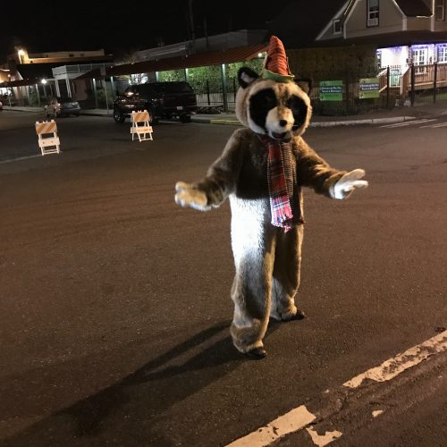 Rocky Raccoon standing in street