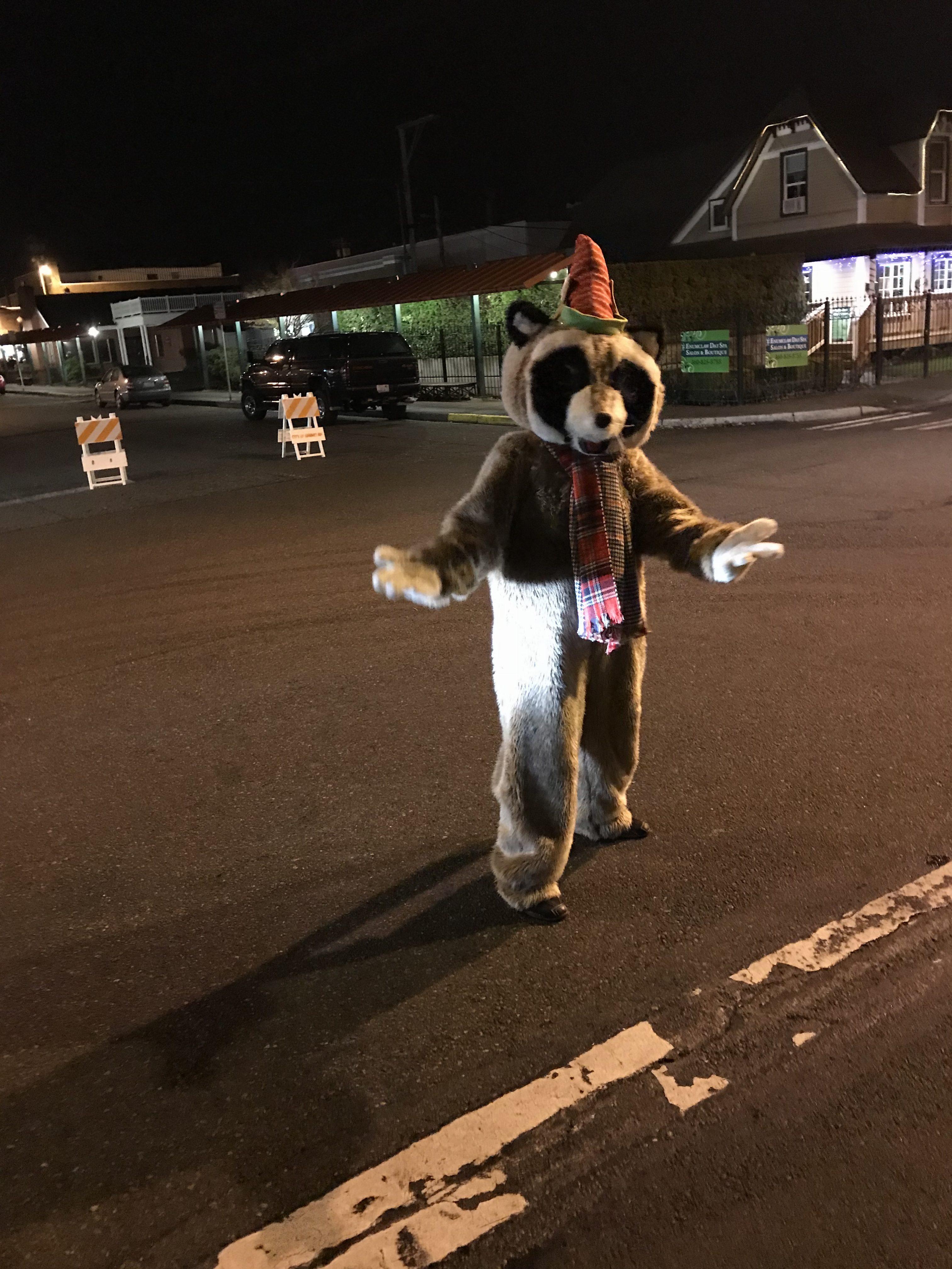 Rocky Raccoon standing in street